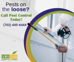 best Pest control services in Las Vegas.